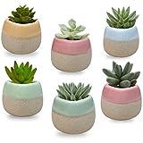 Mini Macetas Ceramica (Pack de 6) - 5.5 x 5.5 cm de Alto - Set Macetas Suculentas con...