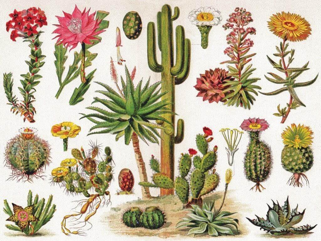 variedades de cactus