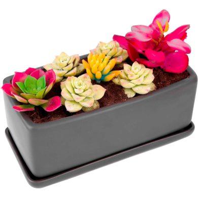 Jardineras para Cactus